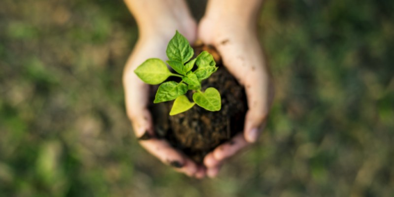 Quiz: How Sustainable Are You?