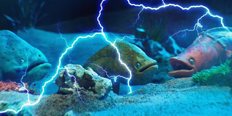 Electric Fish Trivia Quiz! Test Your Knowledge About Electric Fish