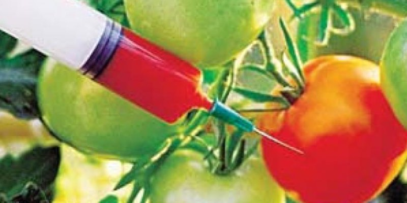 Trivia Quiz On Genetically Modified (GM) Crops