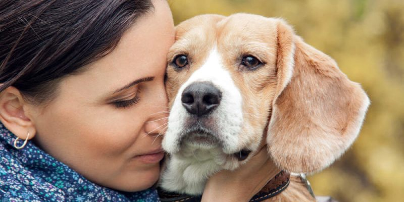 How To Tell If Your Dog Loves You or Not Quiz