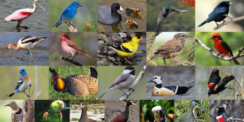 Quiz: Which New Zealand Bird Are You?