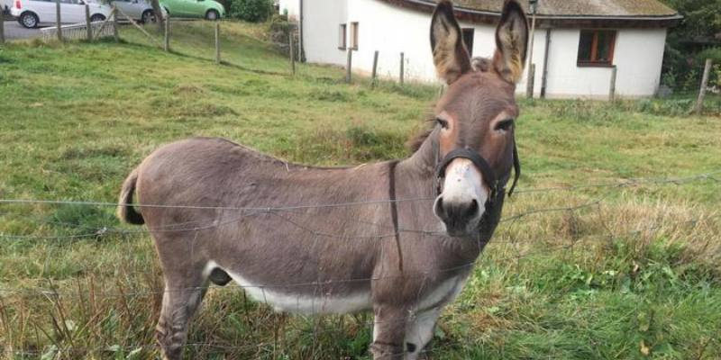 Quiz: How Much You know About Donkey?