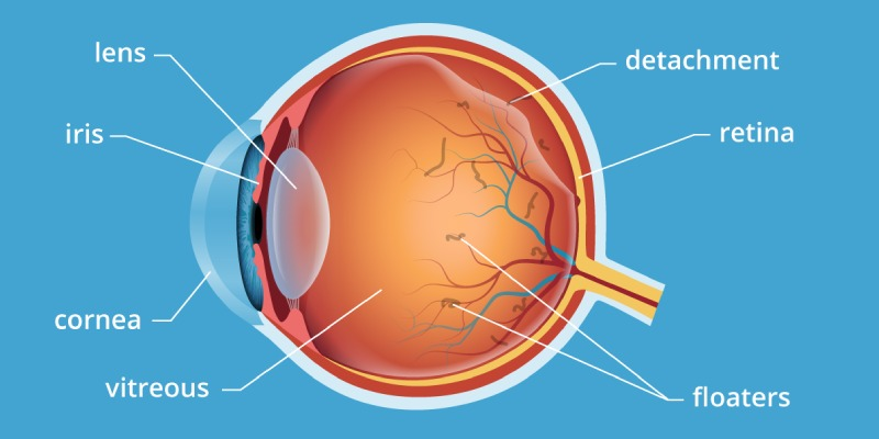 Quiz: Test Your Knowledge About Human Eye
