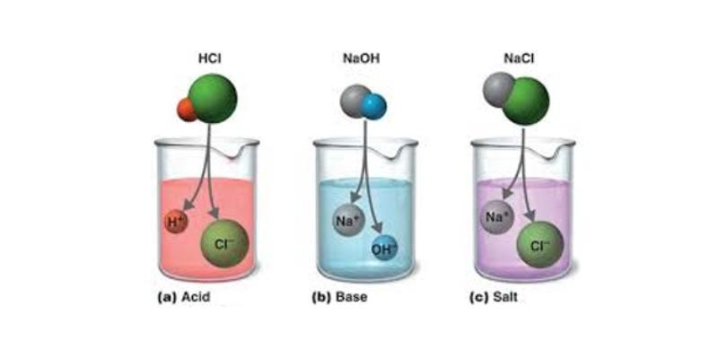 Acids, Bases And Salts Trivia Quiz 7th Grade Students