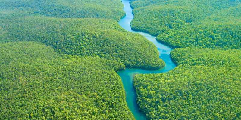How Much You Know About The Amazon Rainforest: The Amazon Jungle Trivia Quiz