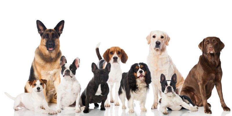 Quiz: What Dog Breed Am I?