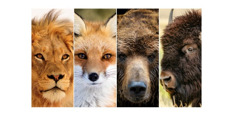 Quiz: If You Were An Animal What Would You Be?