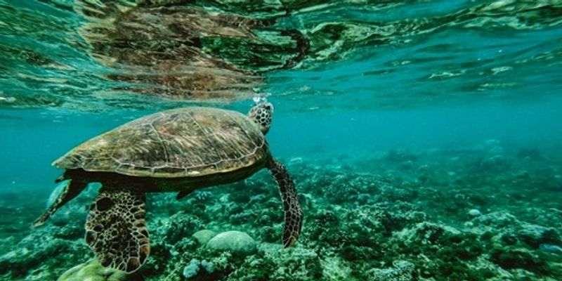 Quiz: Can You Pass This Test On Aquatic Habitat?