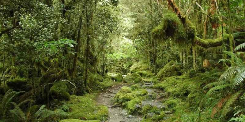 Trivia Quiz On Natural Vegetation