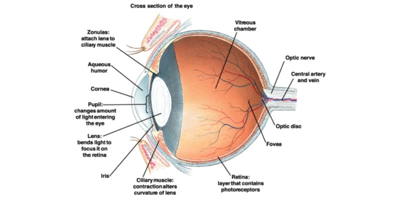 Interesting Facts About Human Eye