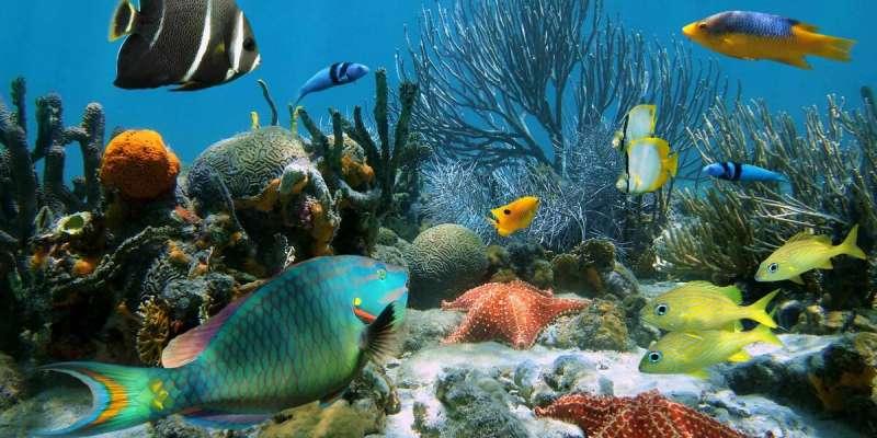 Ocean Animals Quiz: How Much You Know About Ocean Animals?