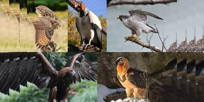 Quiz: What Bird Am I?