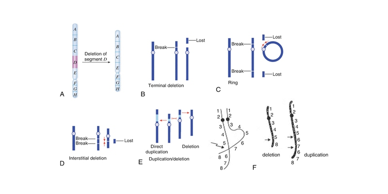 Change In The Structure Of The Chromosome Trivia Quiz
