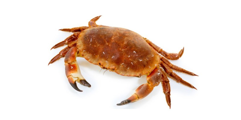 What Kind Of Crab Are You Quiz