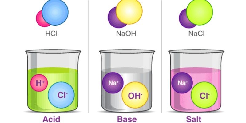 Science Acids Bases and Salts Chapter Quiz For 7th Grade Student