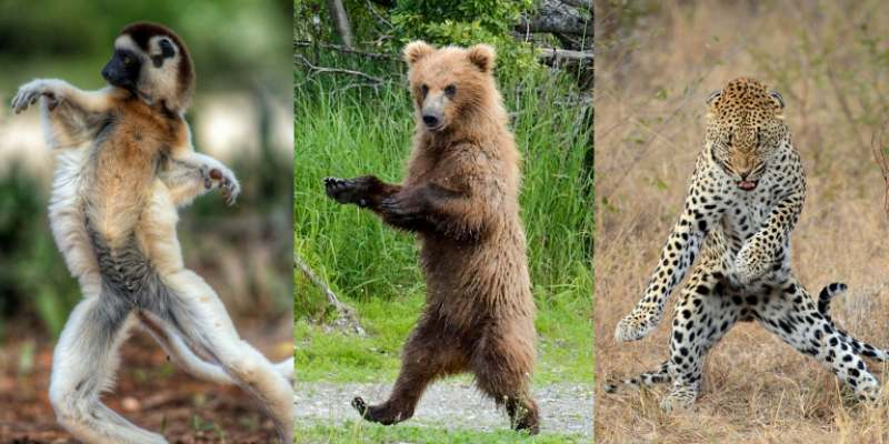 Quiz: Which Dancing Animal Are You?