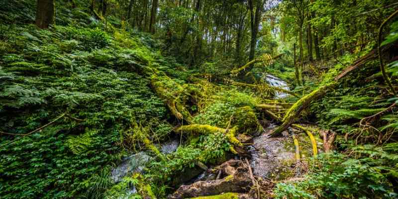 Quiz: How Well You Know About Terrestrial Habitat?