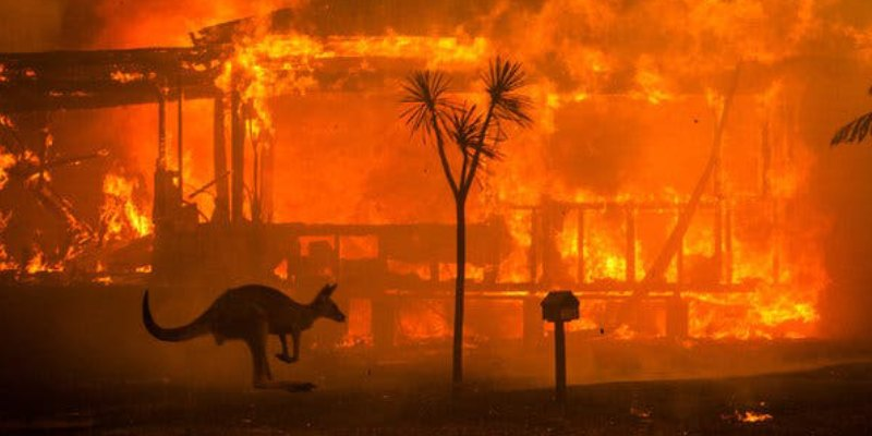 Test Your Knowledge About Australia Fires Trivia Quiz