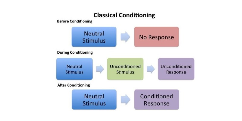 Conditioning Theory Quiz: How Much You Know About Conditioning Theory?