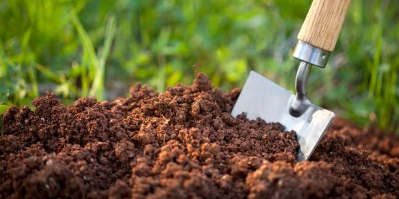 Soil Quiz Question And Answer For 7th Grade students