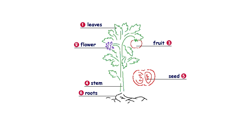Ultimate Trivia Quiz on Getting to Know Plants for Grade Six