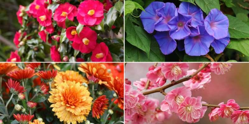 Which Flower Am I Quiz