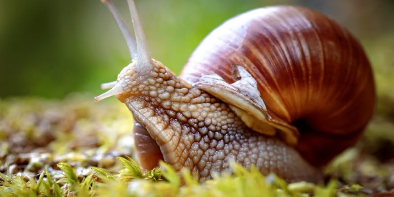 Snail Quiz: How Much You Know About Snail?